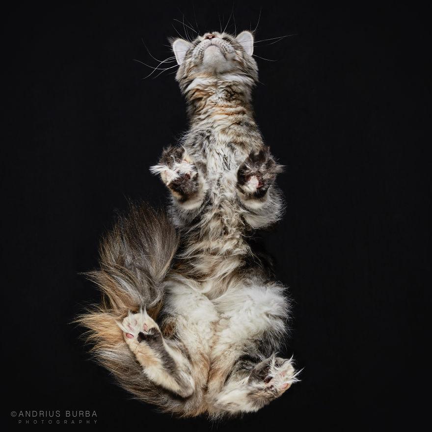 fotos de gatos desde abajo 15