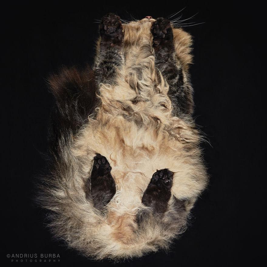 fotos de gatos desde abajo 2