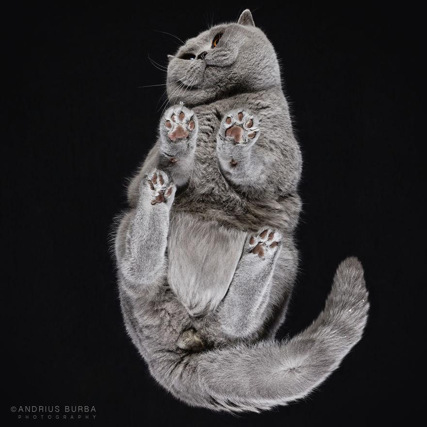 fotos de gatos desde abajo 4