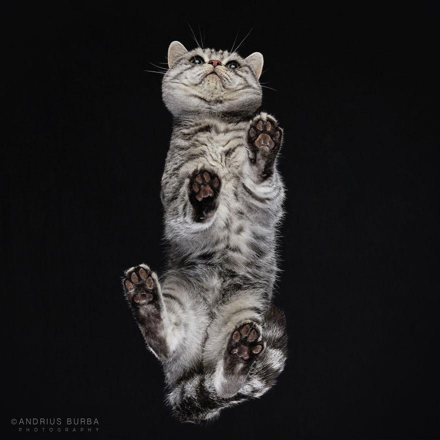 fotos de gatos desde abajo 6