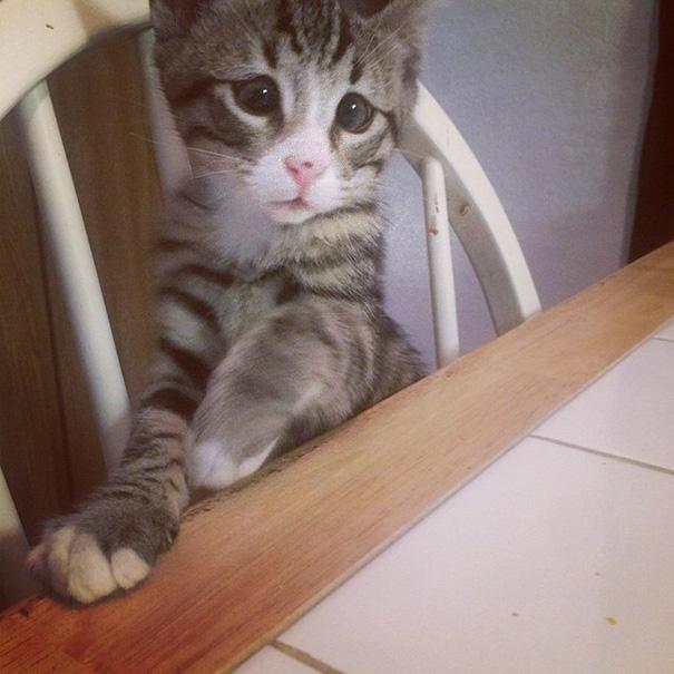 gato 4