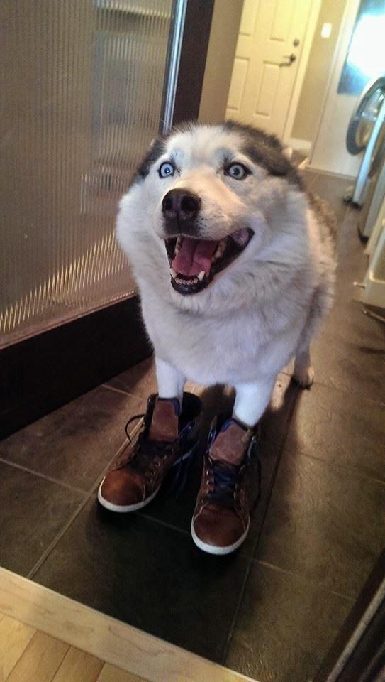 perro con zapatillas nuevas