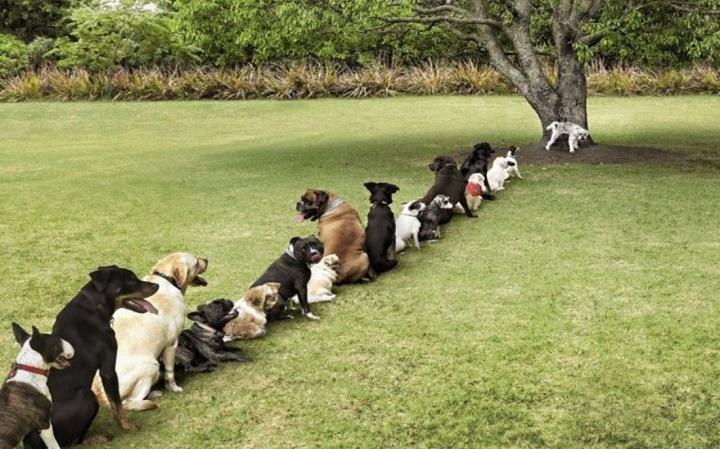 perros meando ordenadamente