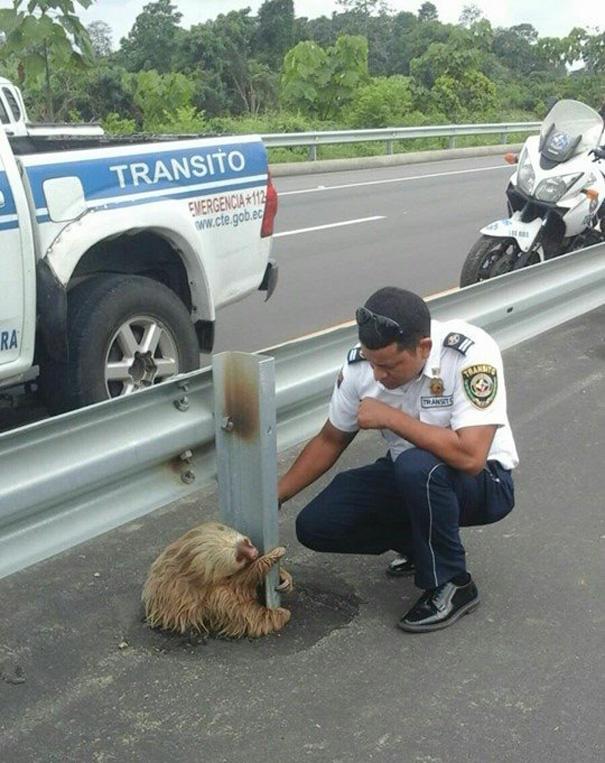 policia rescatando a un oso perezoso 4