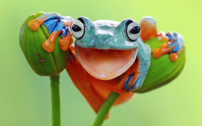 rana de colores