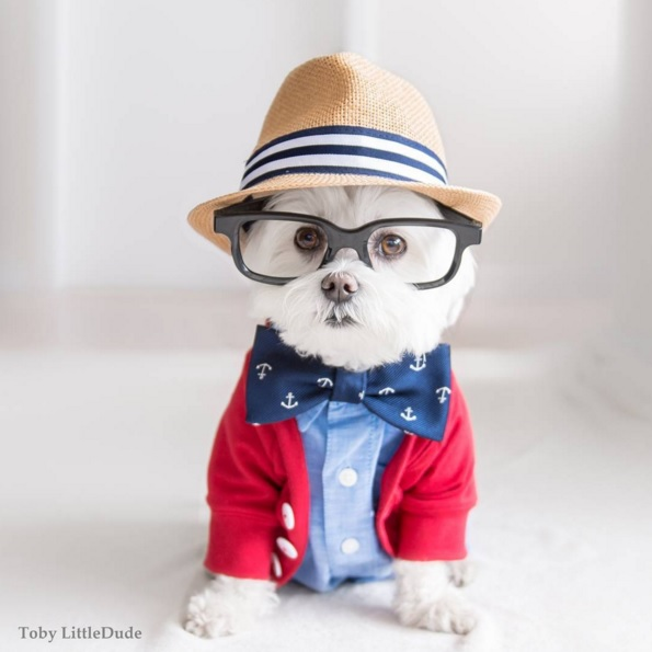 Toby perro hipster 1