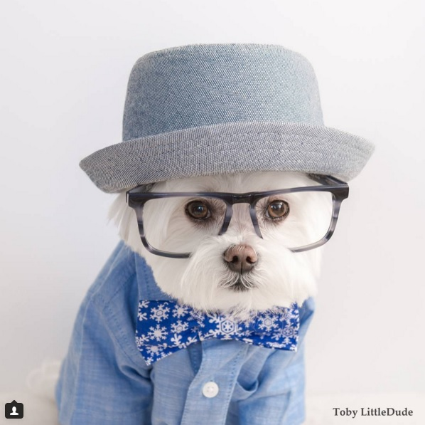 Toby perro hipster 10