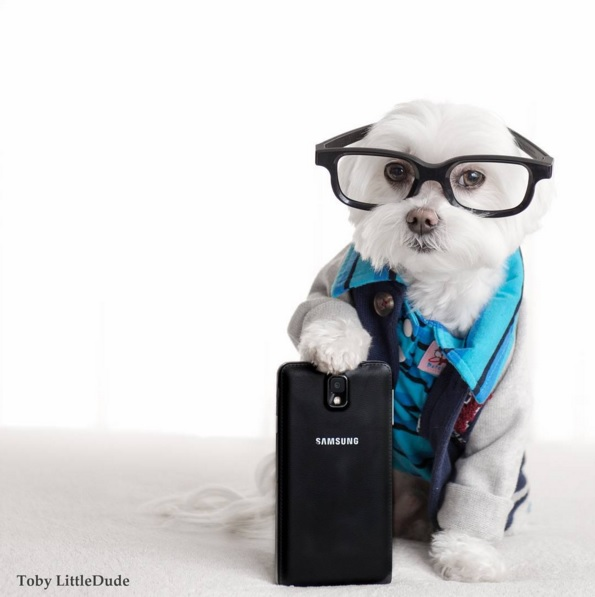 Toby perro hipster 11