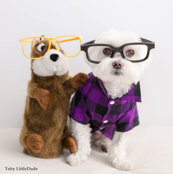 Toby perro hipster 12