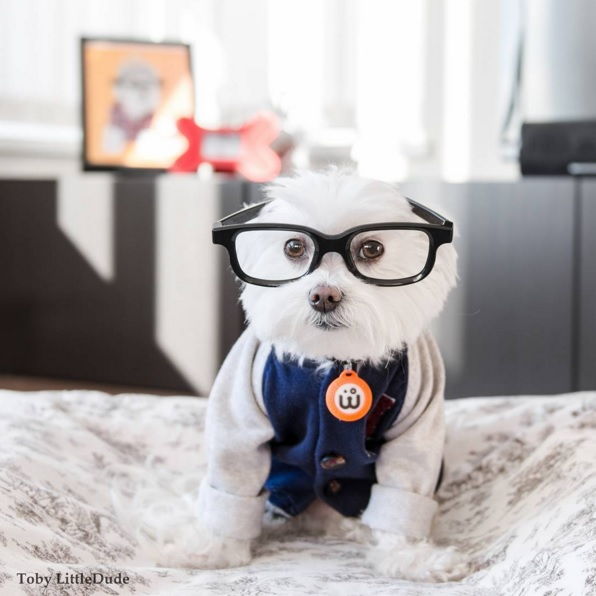 Toby perro hipster 2