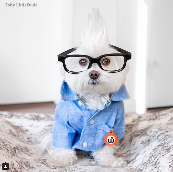 Toby perro hipster 3