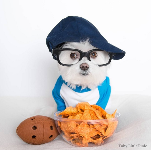 Toby perro hipster 4 /></p><p><img src=