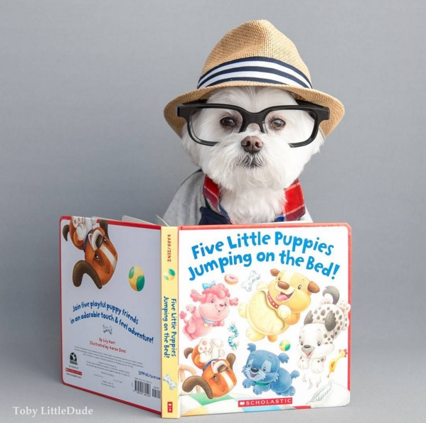 Toby perro hipster 6