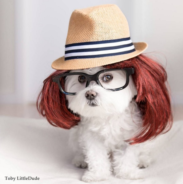 Toby perro hipster 7