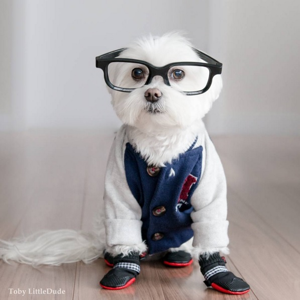 Toby perro hipster 8