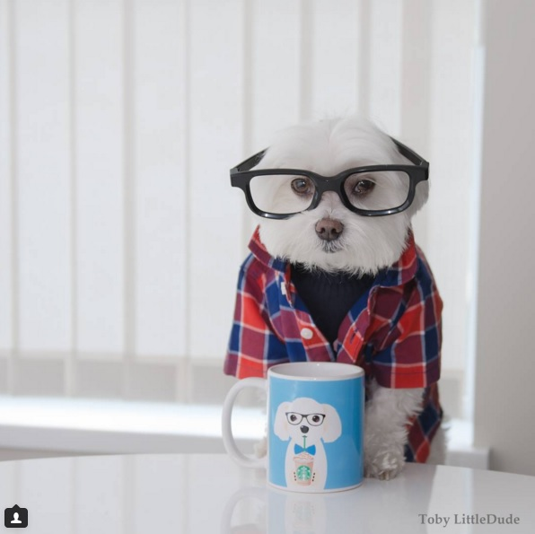 Toby perro hipster 9