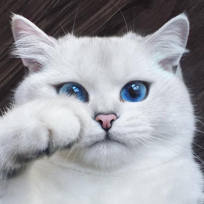coby ojos azules 1