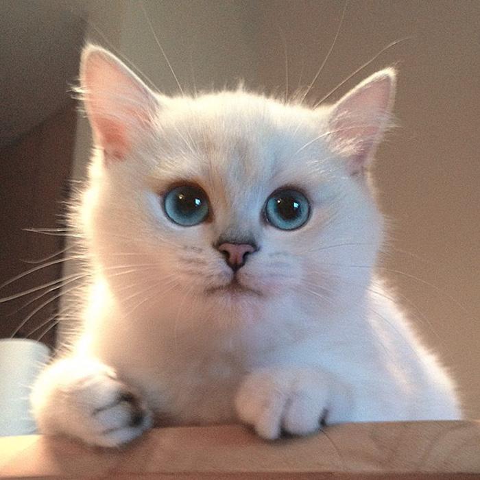 coby ojos azules 10