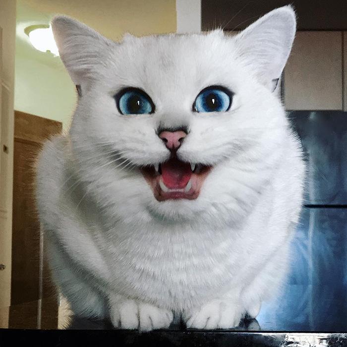 coby ojos azules 11