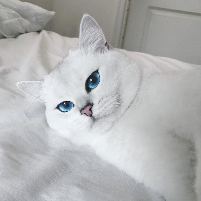 coby ojos azules 12