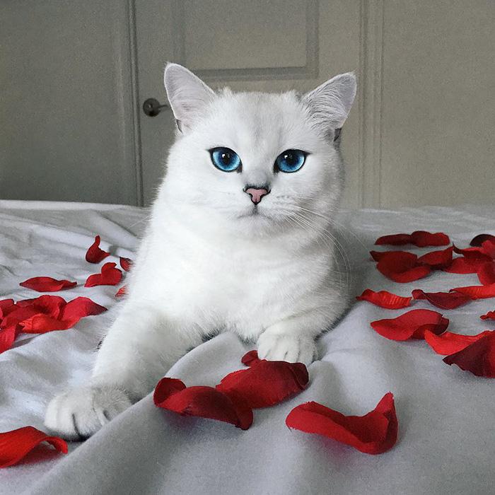 coby ojos azules 13
