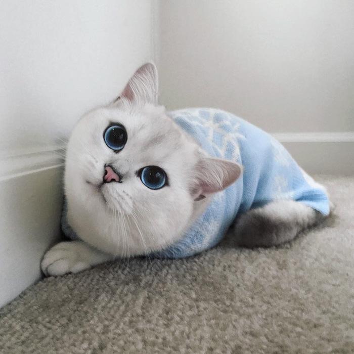 coby ojos azules 14