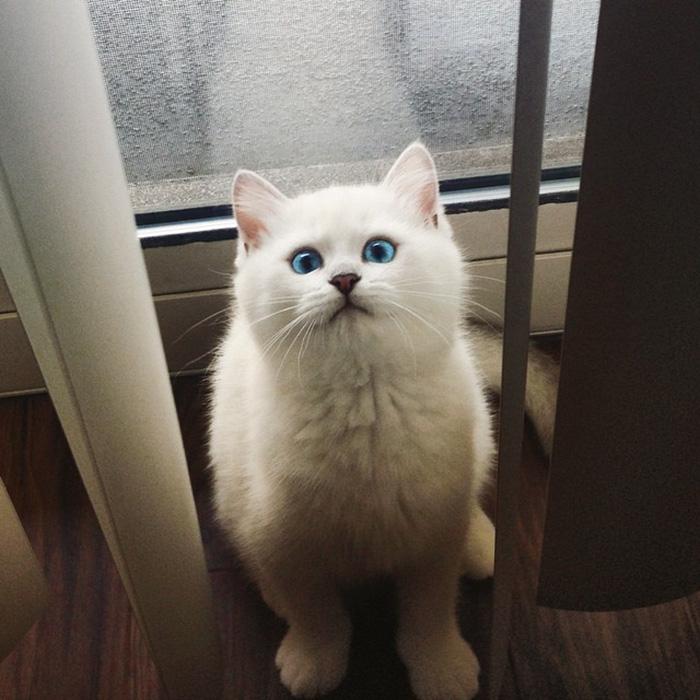 coby ojos azules 15