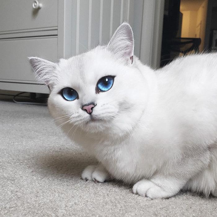 coby ojos azules 16