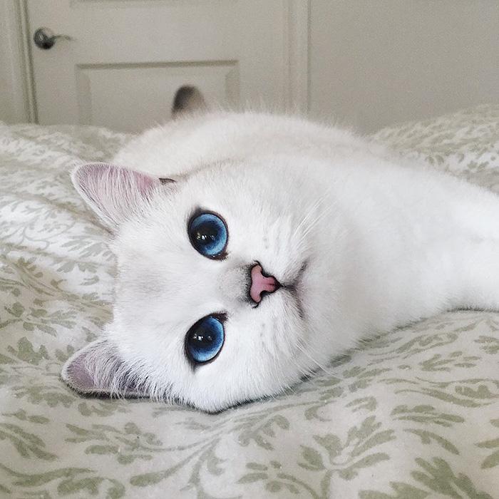 coby ojos azules 17