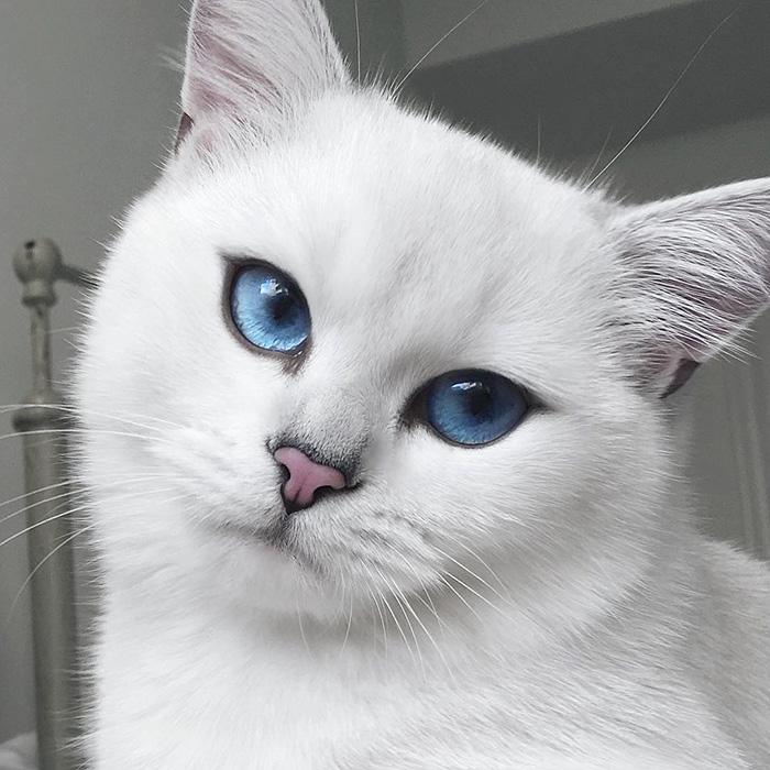 coby ojos azules 3