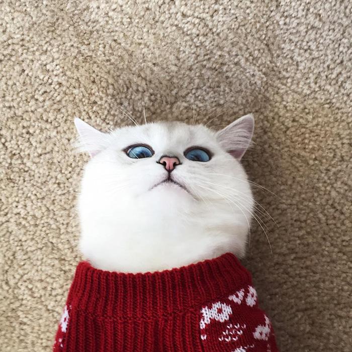 coby ojos azules 5