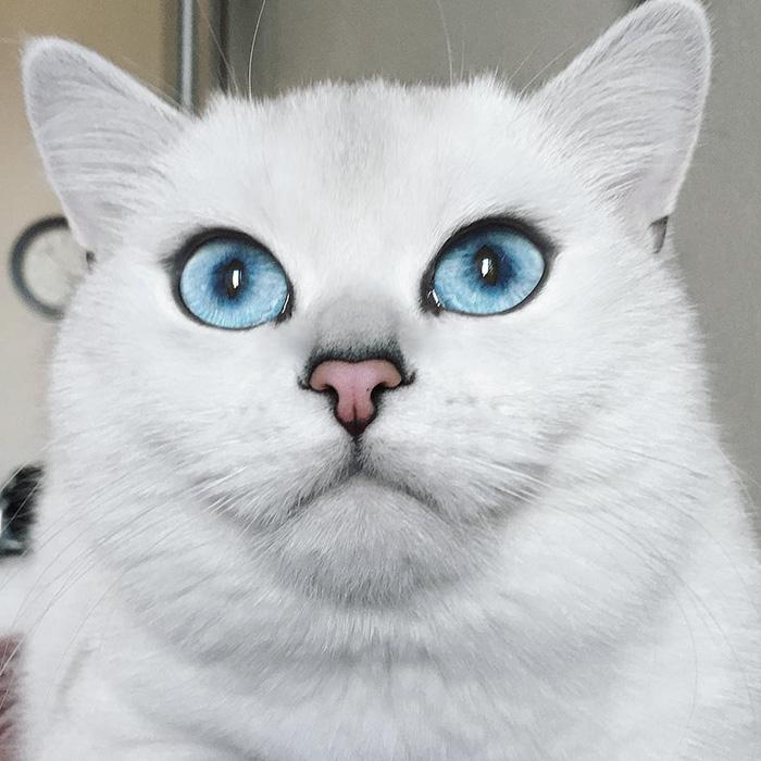 coby ojos azules 6