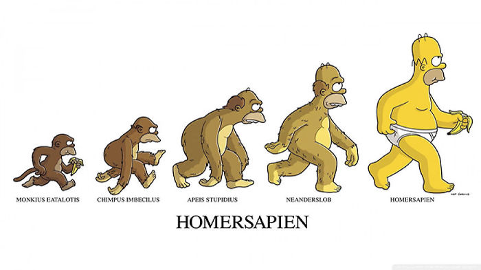 dibujos evolucion 11
