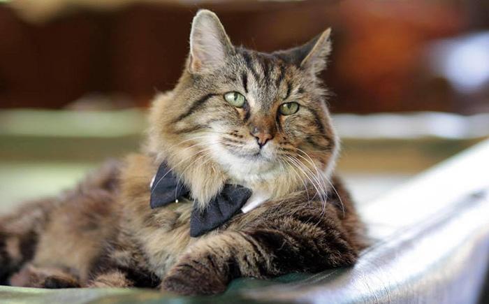 el gato mas viejo del mundo 1