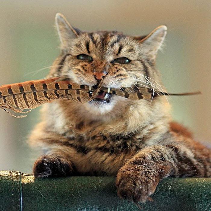 el gato mas viejo del mundo 12