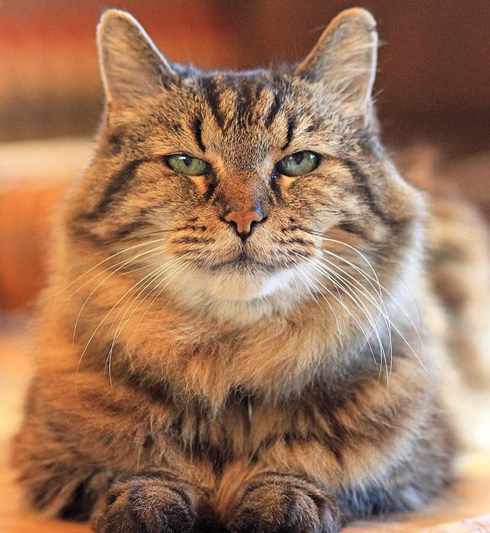 el gato mas viejo del mundo 2
