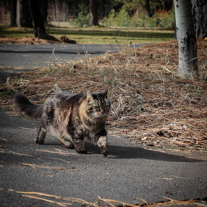 el gato mas viejo del mundo 3