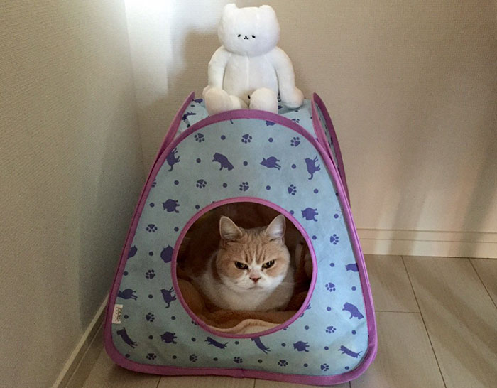 nuevo Grumpy Cat 10