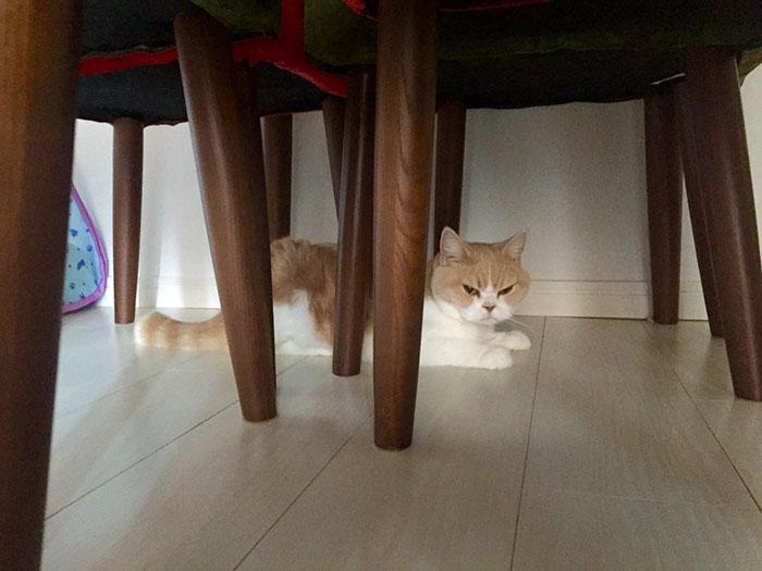 nuevo Grumpy Cat 12