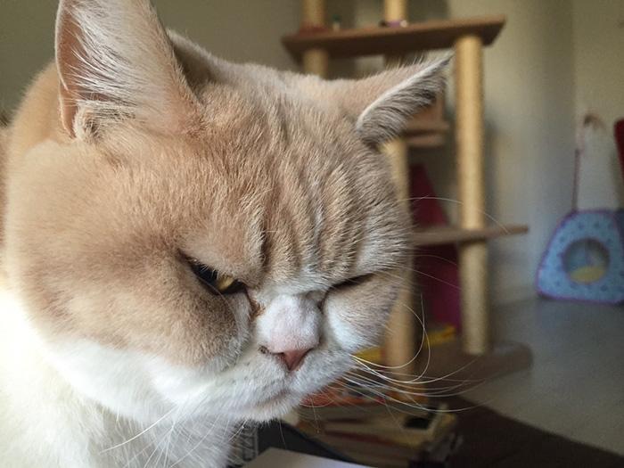 nuevo Grumpy Cat 13