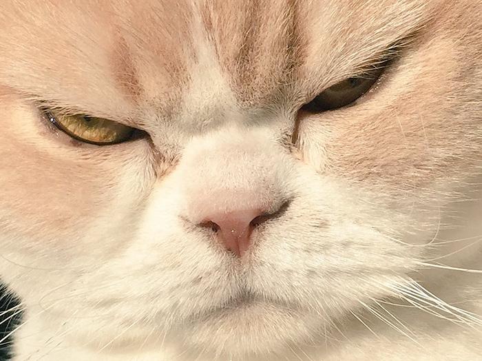 nuevo Grumpy Cat 14