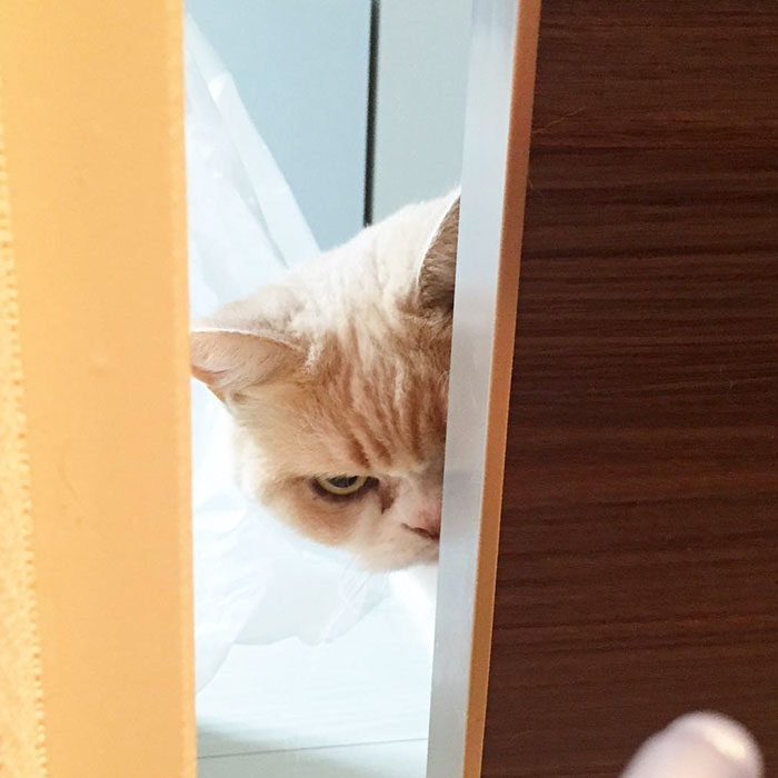 nuevo Grumpy Cat 2