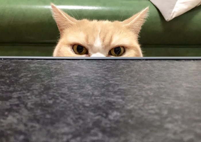 nuevo Grumpy Cat 4