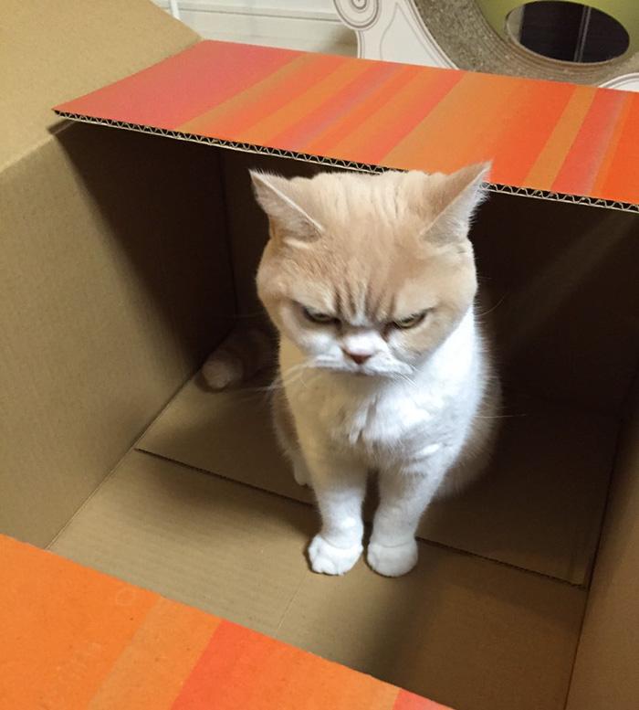 nuevo Grumpy Cat 5