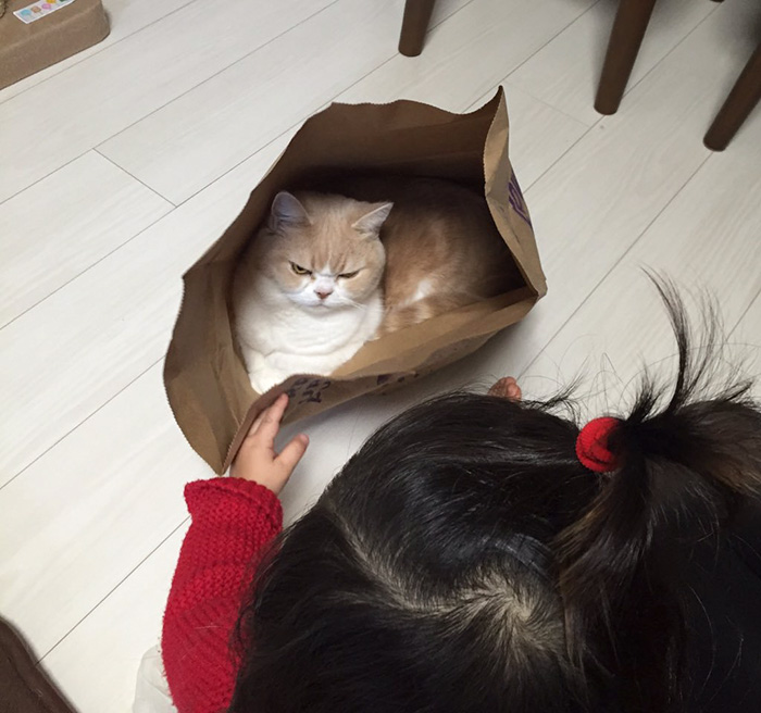 nuevo Grumpy Cat 6
