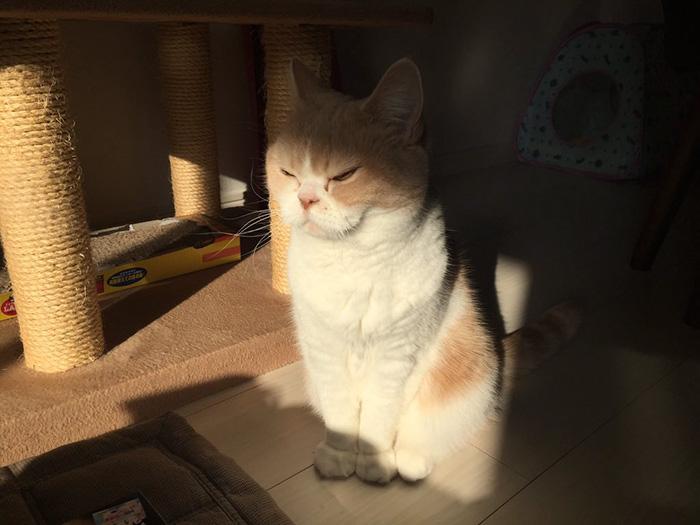 nuevo Grumpy Cat 8