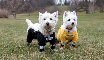 pantalones para perros