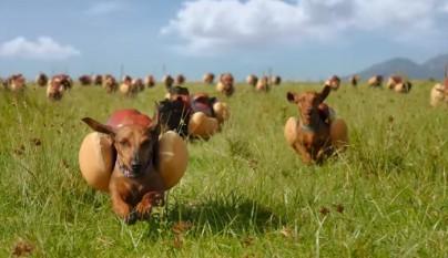 perritos anuncio Heinz