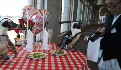 Fotos y Fondos » Fotos de pingüinos