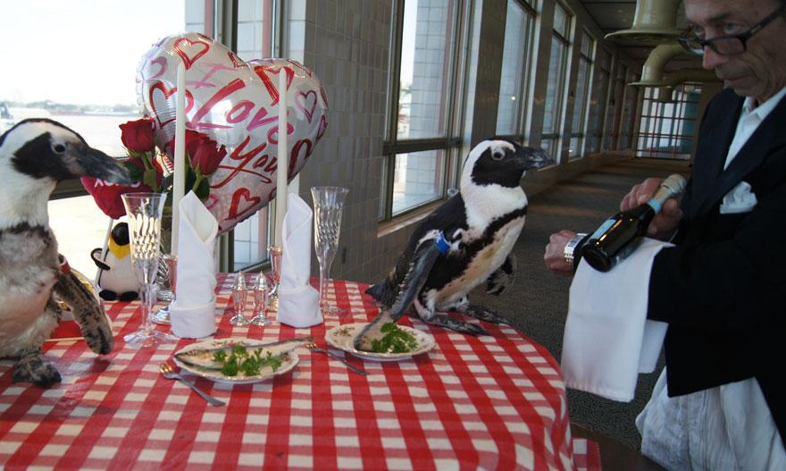 pinguinos San Valentin 1